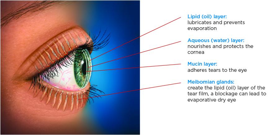 tear-film-anatomy